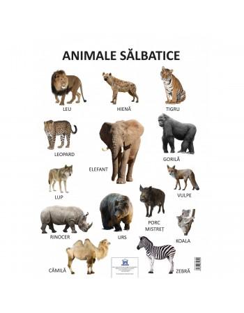 PLANSA - ANIMALE SALBATICE